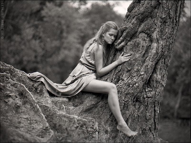 Приручение деревьев/Taming of a tree